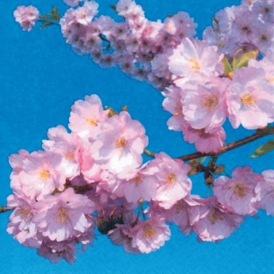 Lunch Servietten Apple Blossom,  Blumen -  Sonstige,  Frühjahr,  lunchservietten,  Kirschblüte