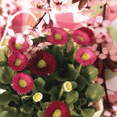 ti-flair,  Blumen -  Sonstige,  Blumen,  Frühjahr,  lunchservietten,  Blumen